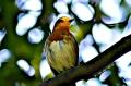image of bird on branch haiku
