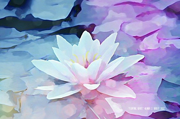 image of water lilly haiku