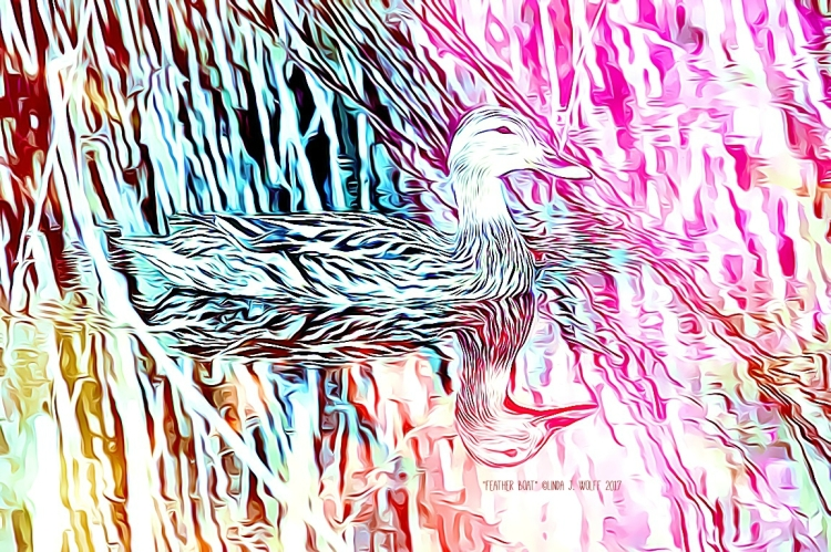 image of feathered duck on water