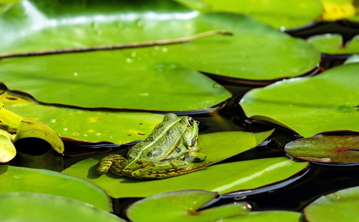 frog-1495034_12802