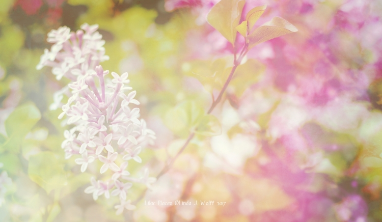 poetry image of lilac places