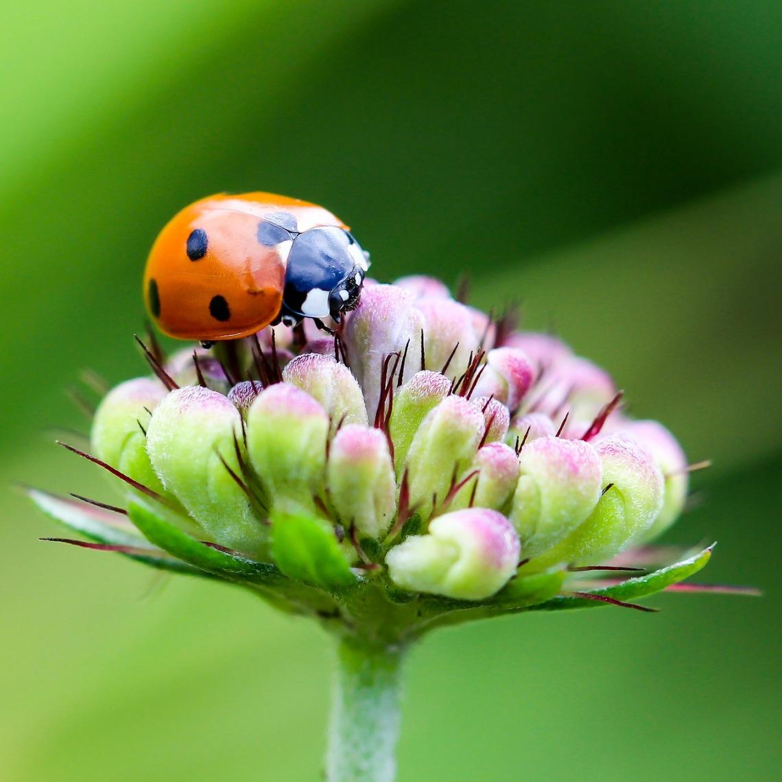 haiku about ladybug