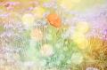 haiku and flower image