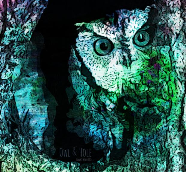 owl art image