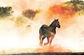 image of horse running