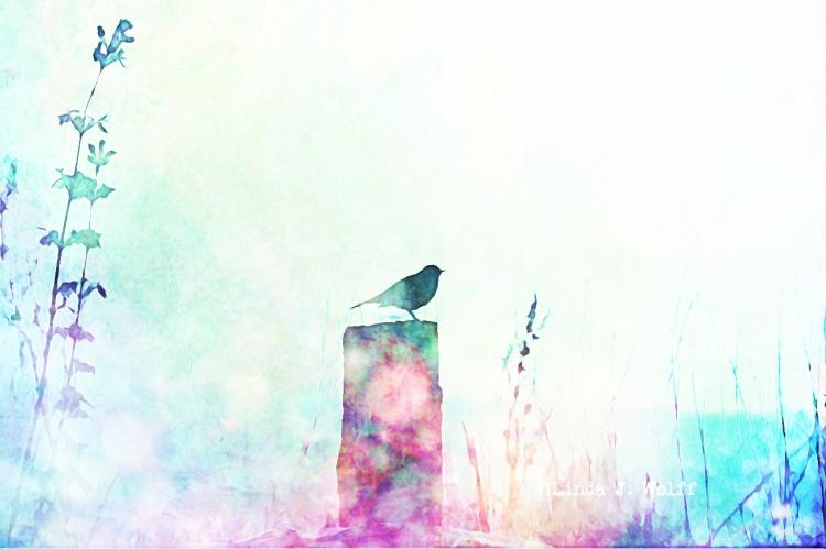 image bird on post