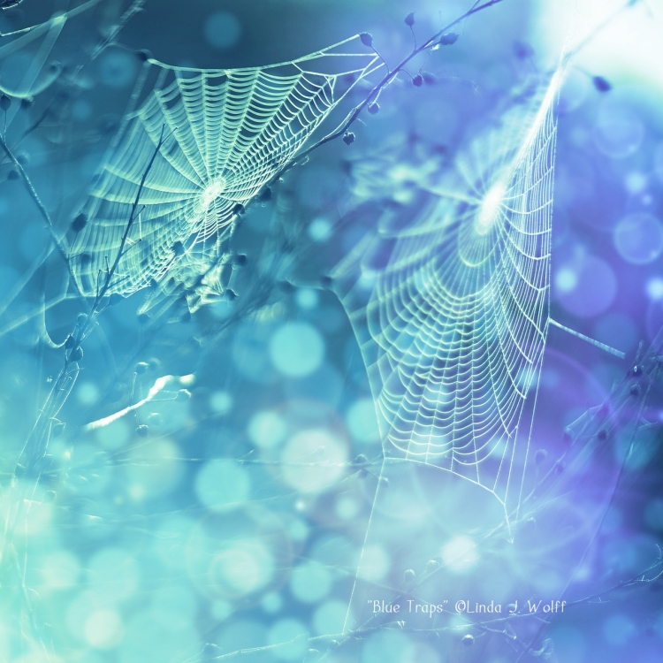image of spider webs poetry