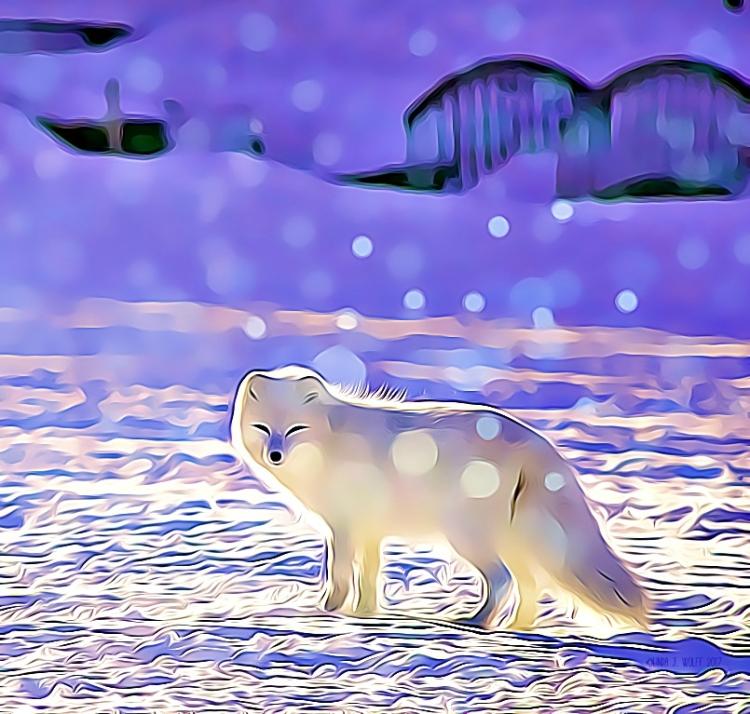 image of arctic fox haiku