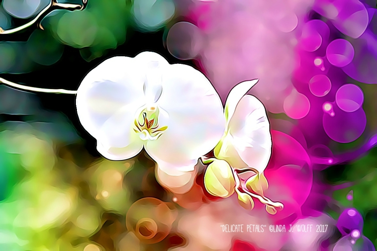 image of haiku and white orchid