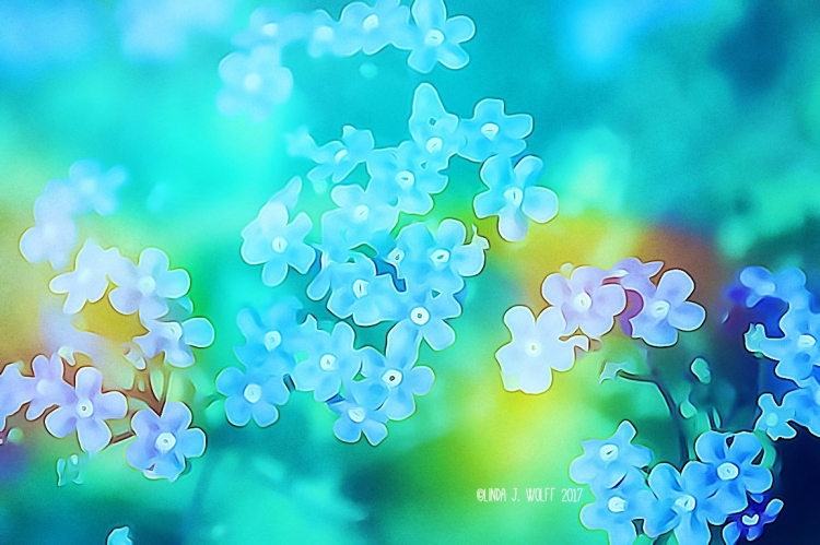 image of blue flowers