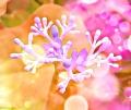 image of flower fingers