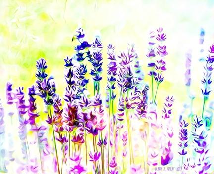 image of lavender flowers