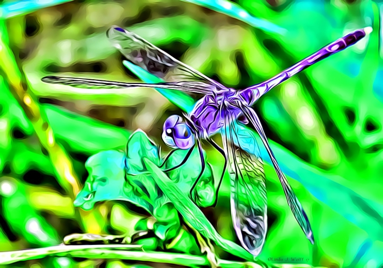 image of colorful dragonfly
