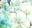 image of big flower blossoms.