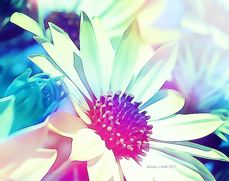 image of wild flower.