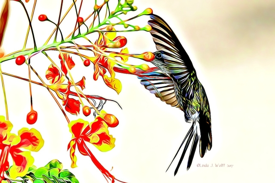 image of hummingbird in flight