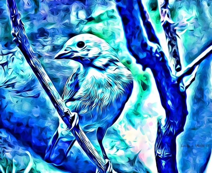image of bluebird sitting on branch
