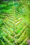 image of fern plant reaching for the light