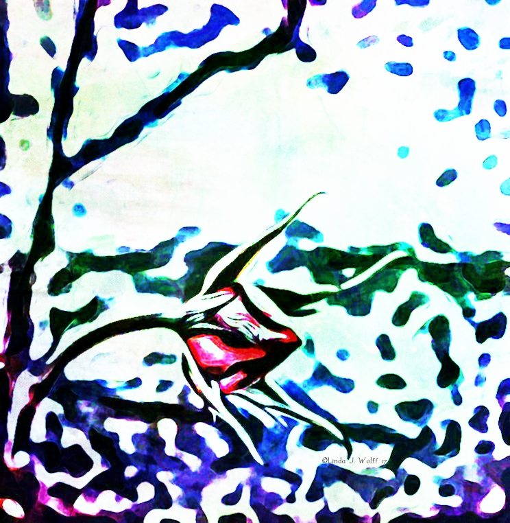 image of a singular rosebud