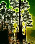image of swampfool
