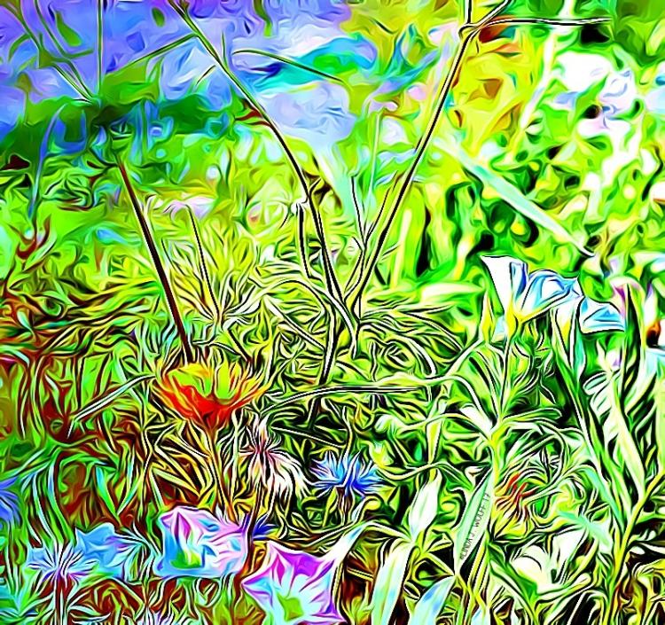 tamingwildflowers