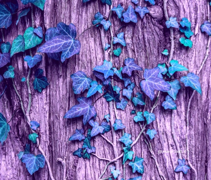 image of vines tangled around each other.
