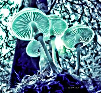 image of mushrooms and haiku poetry