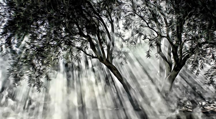 image of light shining through trees