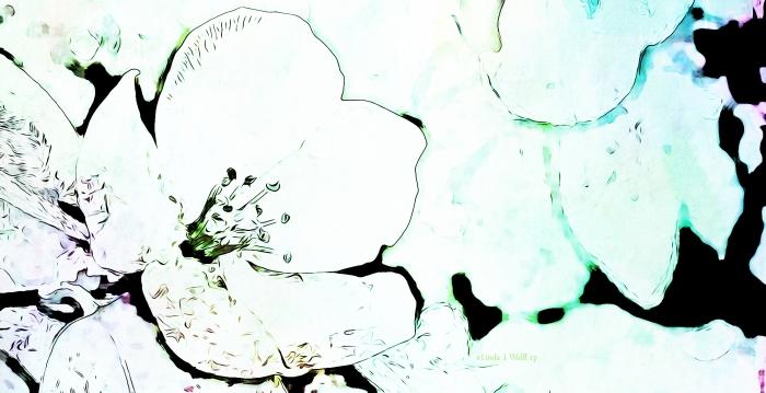 image of rose flower petals