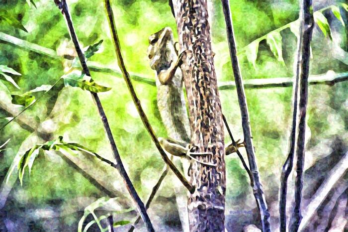 image of a chameleon