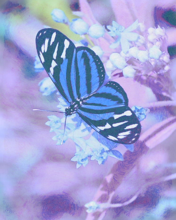 image of butterfly and poetry