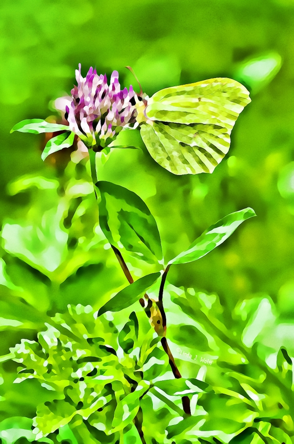 image of solitude of butterfly and clover blossom