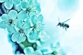 image of flowers and honey bee.