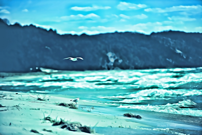 image of seagulls, ocean shore, and poetry