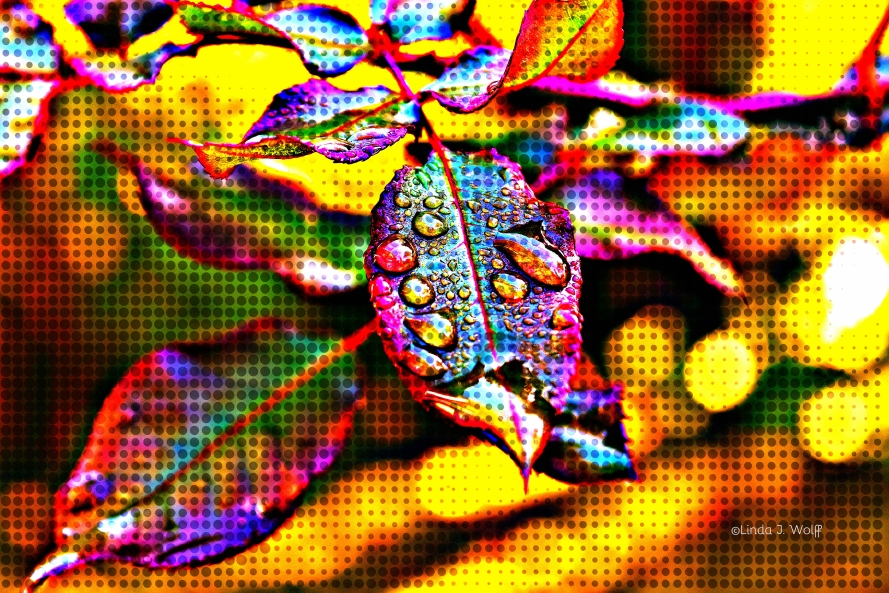 image of resisting rain poetry