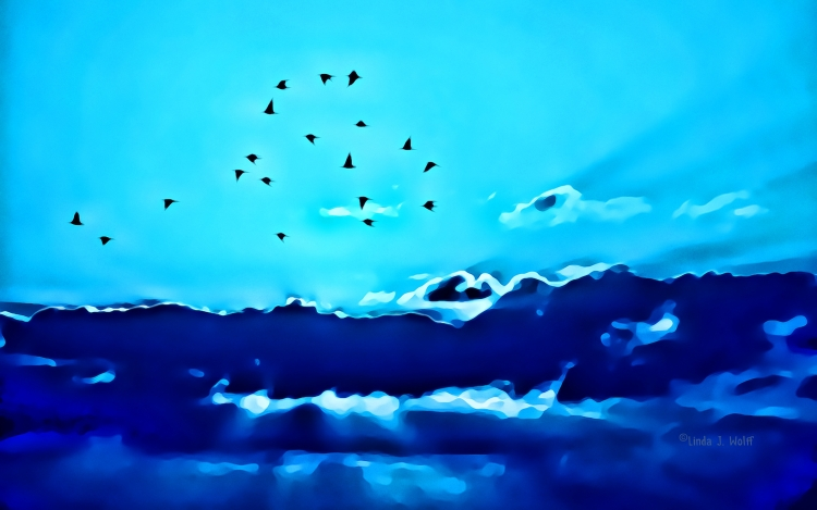 image of birds flying home