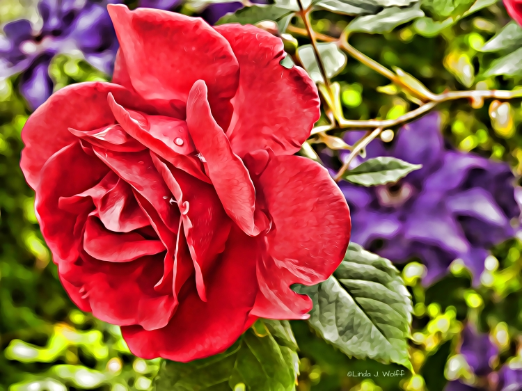 "In this free verse poetry ""Survive and Thrive Red Rose."""