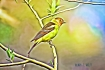 image of the flaming songbird and poetry about it