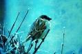 image of talking sparrow in poetry