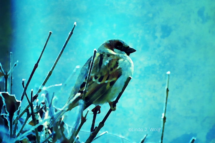 image of talking sparrow in poetry
