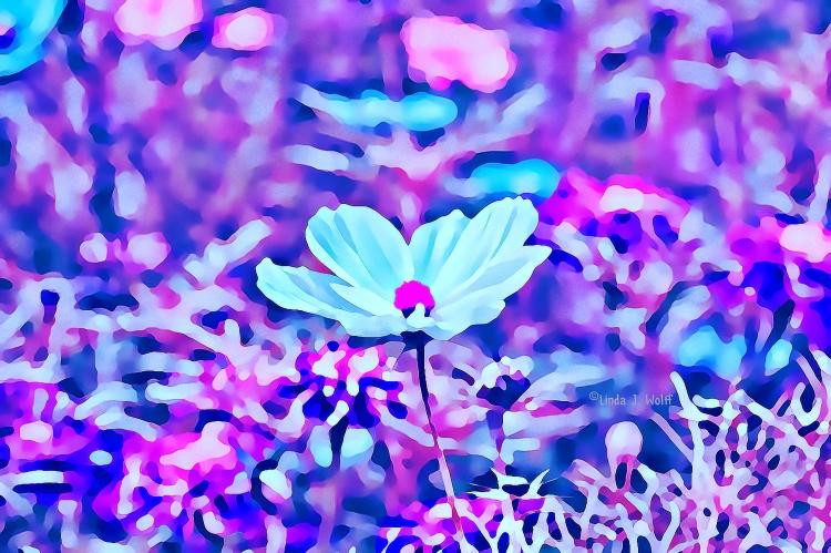image of white flower seeking
