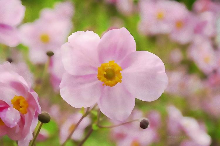 """Image of free verse poetry """"Pressed Words & Flowers."""