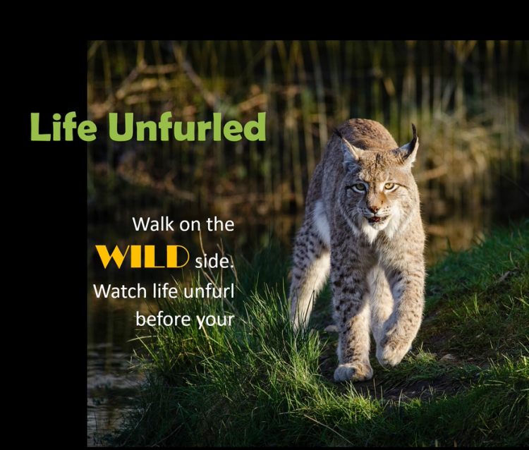 "Image of video ""Life Unfurled""."