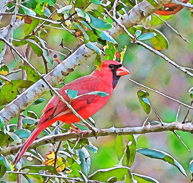 """Image of daily haiku, """"Fluttering Red."""""""