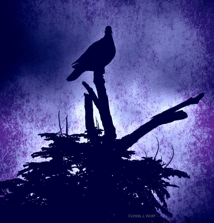 "Image of daily haiku, ""Shadow Bird."""