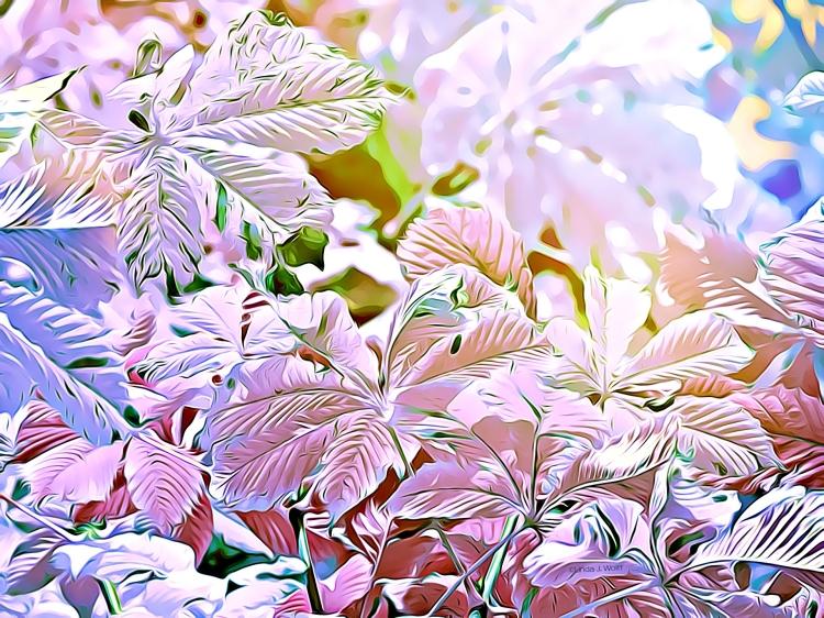 "Image of urban free verse poetry, ""White Flowers Flirting."""